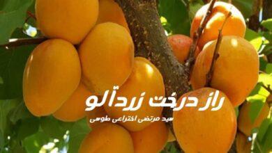 تصویر از رمان راز درخت زردآلو
